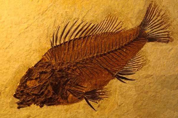 fosil[1]