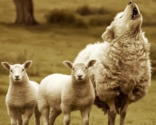 lobo+disfrazado+de+oveja[1]